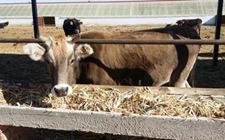 河南:以重构新型种养关系为重点 加快推进畜牧产业转型升级