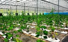 我国农业科技进步贡献率超过56% 农业科技重要性更加凸显