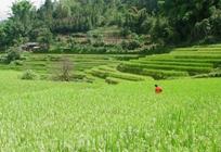 今年全国农业农村经济迎来良好开局