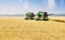 """新农人蒋丽英:""""农业一定会成为更有前景的产业"""""""
