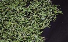 <b>四川泸州市纳溪区:小茶叶托起亿元产业</b>