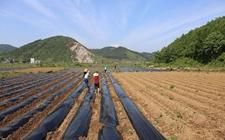1月份中国农业农村经济:运行平稳 开局良好