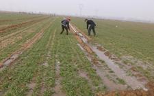 山东聊城:冠县6.2万亩小麦喝上返青水