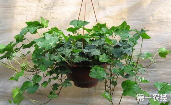 7种室内常见的盆栽植物介绍!分分钟扮靓你的家
