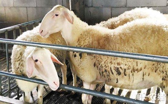 浙江:继续优化畜牧业布局  推进畜牧业绿色发展