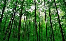 <b>四川:推动林业科技成果转化 强化科技在生态建设中的支撑作用</b>
