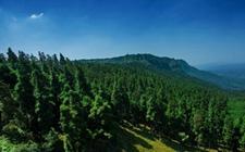 """四项措施稳步推进信息化建设工作 林业信息化被纳入""""十三五""""规划"""