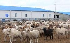 <b>西藏:提质增效畜牧业健康发展 农牧业供给侧改革成效显著</b>