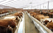 """黑龙江大庆:抓住""""南畜北移""""战略调整机遇 推进畜牧业转型升级"""