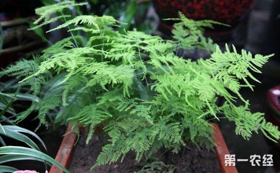8种适合养在办公室的盆栽植物介绍!吸收辐射保健康