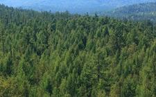 <b>甘肃:加快推进林业改革 确保全年完成营造林面积360万亩</b>