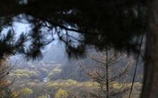 宁夏着力打造西部绿色生态高地 加强特色优势经济林产业基地建设