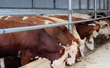 山东青州:加快发展绿色畜牧业 推进乡村振兴战略