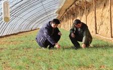 内蒙古阿拉善韩文军:大棚种植沙葱好致富