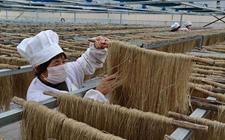黑龙江鸡西市张鲜村:加工土豆粉条成农民致富好项目