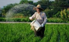 中国粮食增产是化肥喂出来的?韩长赋在人大会议上这样回应