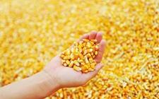2018年吉林玉米饲料企业加工补贴政策