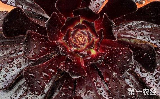 """8种既好看又好养的多肉植物介绍!简直是""""养花杀手""""的福音"""