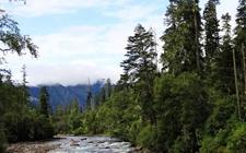 <b>西藏:开展六大林业产业项目建设 强化林业产业综合功能</b>