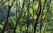 安徽省率先建立林长制 年内建成五级林长制体系