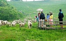 <b>山东东营:大力发展休闲观光畜牧业 促进畜牧业现代化建设</b>