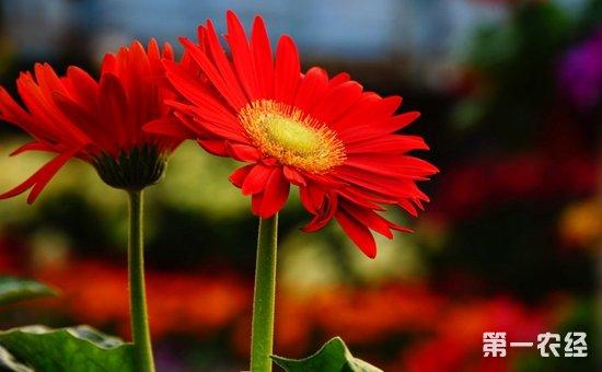 7种具有良好吸收甲醛效果的盆栽植物介绍!吸收甲醛好帮手