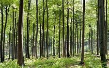 <b>以人民为中心实现高质量发展 为推动林业现代化建设标注新方位</b>