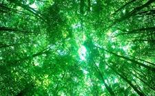 世界林业发展的十大热点与趋势 手心紧握林业发展的脉搏