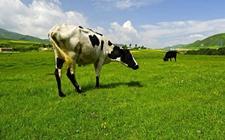 青海:创新生产经营方式 推进草地生态畜牧业变革