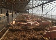 养猪场都有哪些圈舍?养猪场圈舍