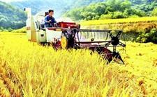 农行大力推广商业可持续金融扶贫模式