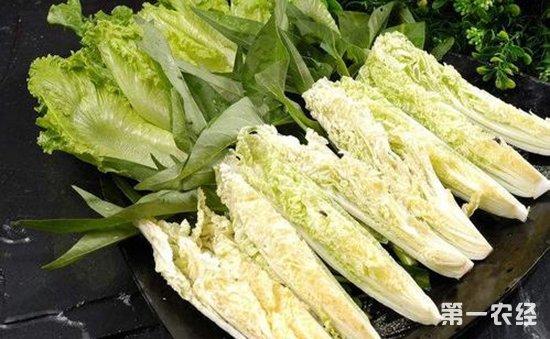 日本国产蔬菜严重紧缺   叶菜类蔬菜进口数量急剧攀升