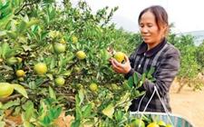 未来利润最高的农村创业致富项目有哪些?
