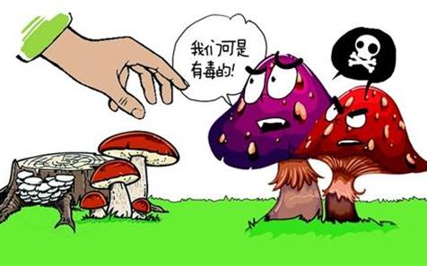 春季是毒蘑菇中毒高发期 食药监局提醒民众:小心误食毒蘑菇
