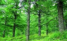<b>吉林:推进林业生态保护修复 加快林业产业转型发展</b>