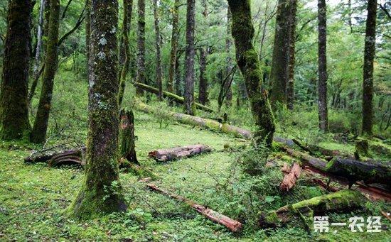 云南:2018年力争完成林业投资85亿元以上  促进林业产业融合发展