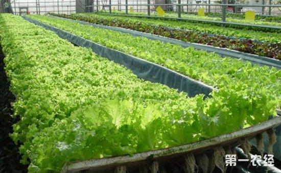 农业科技创新引领乡村振兴发展  提升乡村振兴的质量效益和科技含量