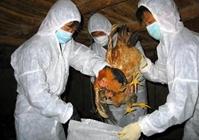 广西灵川县出现高致病性禽流感疫情无害化处理3万只