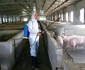 猪场清洗消毒为什么效果不好?猪场消毒常见误区