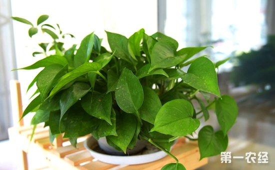 """8种具有良好吸收甲醛效果的盆栽植物介绍!堪称""""甲醛克星"""""""