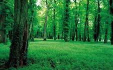 <b>【两会声音】林业是提供优质生态产品的主阵地 切实满足生态需求</b>