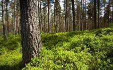 山西:进一步落实2018年林业生态扶贫推进举措
