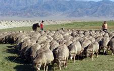 新疆伊犁:提升畜牧业发展的整体水平和效益 稳步推进乡村振兴实施