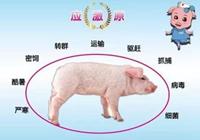 如何有效控制猪场应激反应?养猪场应激防控方案