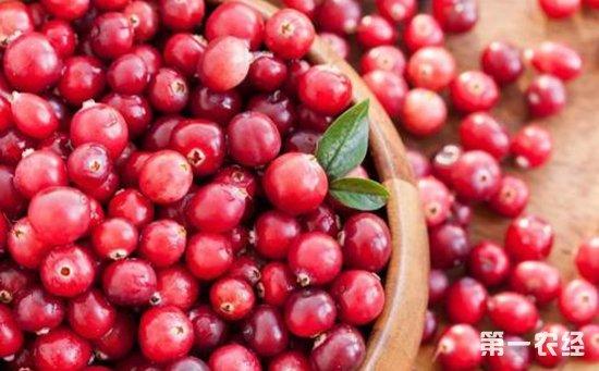 新鲜蔓越莓多少钱一斤?新鲜蔓越莓价格