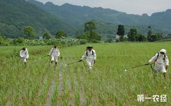 农业部:多措并举继续推进化肥农药减量增效
