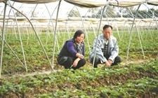 如何把小农户引入现代农业轨道?