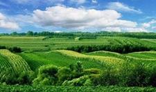 宁夏多管齐下将农业绿色可持续发展进行到底