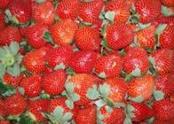 草莓怎么进行贮藏?