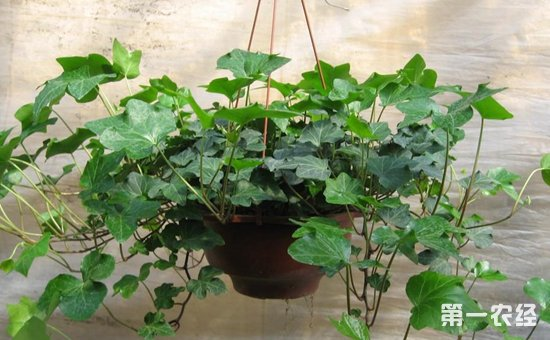 """7种适合养在办公室的盆栽植物介绍!帮你摆脱""""办公室综合征"""""""